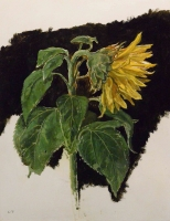 30. Sunflower I